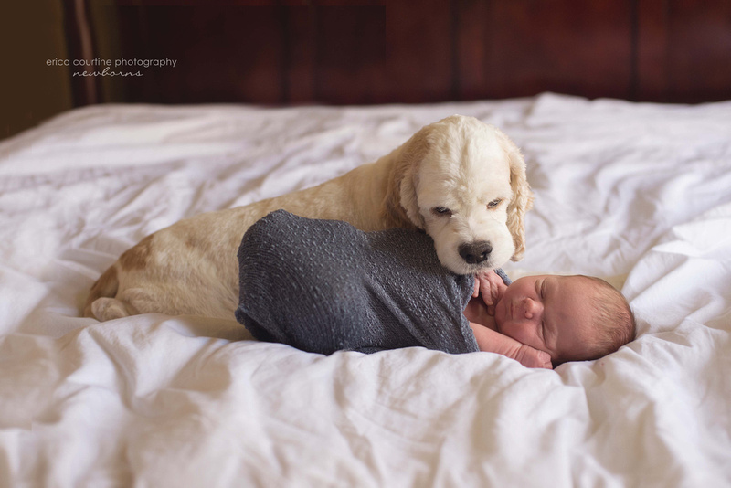 A newborn baby and his dog raleigh cary nc newborn photography in home session.
