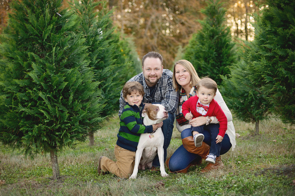 christmas tree farm mini-sessions raleigh cary apex family photographer
